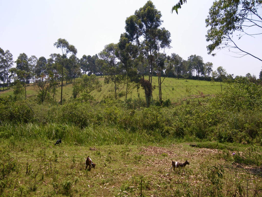 Bäumchen2010 (1)